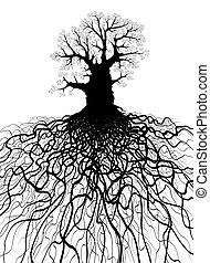 árbol, con, raíces