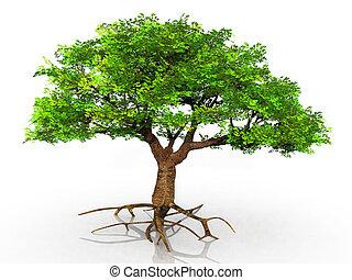 árbol, con, raíces expuestas