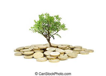 árbol, crecer, de, dinero