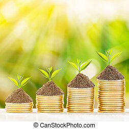 árbol, crecimiento, en, coins