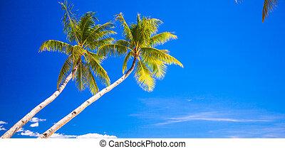 árbol de palma de coco, en, el, playa arenosa, en, filipinas