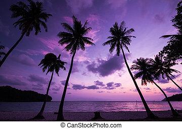 árbol del coco, silhouetted