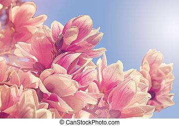árbol del magnolia, flores