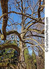 árbol del magnolia