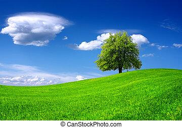 árbol, en, campo verde