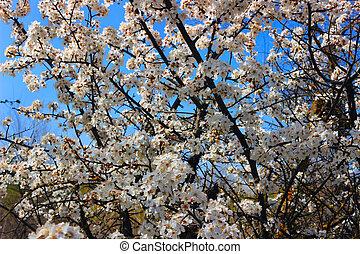 árbol, en el flor