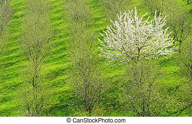 árbol, en, el, primavera