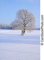 árbol, en, invierno, 05