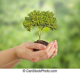 árbol, en, manos