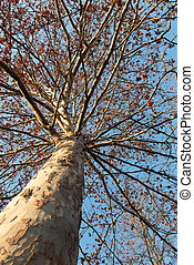 árbol, en, ocaso