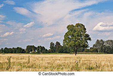 árbol, en, pasto o césped