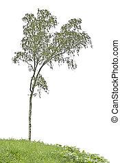 árbol, en, pradera