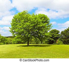 árbol, en, primavera