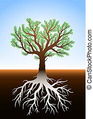árbol, en, tierra, y, es, raíces
