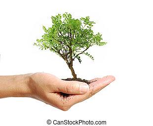 árbol, en, un, mano