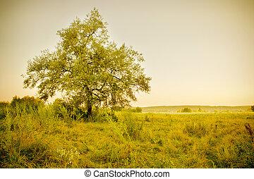 árbol, en, un, pradera