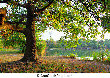 árbol, en, verano, forest.