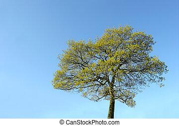 árbol, en, verano