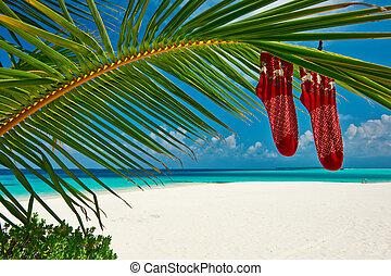 árbol, escamotee playa, navidad