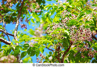 árbol, florecer