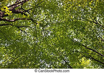 árbol, follaje, búsqueda