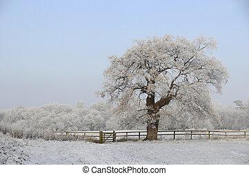 árbol, helado