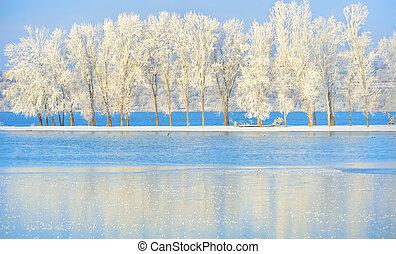 árbol, helado, invierno