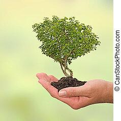 árbol, higo, mano