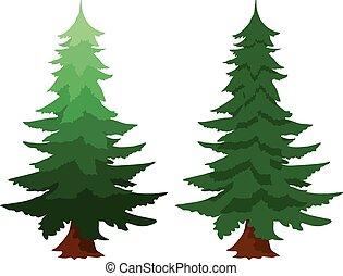 árbol hoja perenne, abeto, dos, árboles