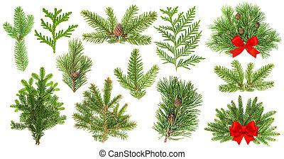 árbol hoja perenne, branches., árbol, decoración, rojo, navidad, cinta