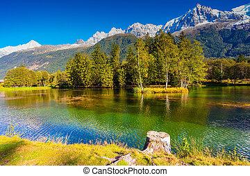 árbol hoja perenne, picea, lago, reflejado