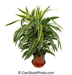 árbol hoja perenne, plantas, planta perenne, -,...