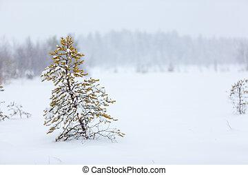 árbol hoja perenne, solo, ventisca, nevoso, árbol, campo,...