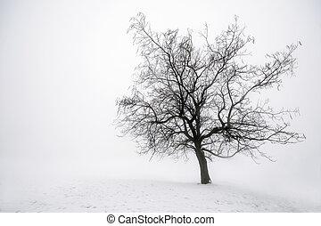 árbol invierno, en, niebla