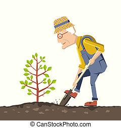 árbol, jardinero, viejo, planta
