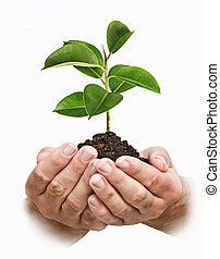 árbol joven, manos