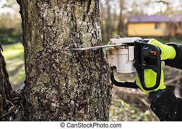 árbol., leñador, chainsaw, corte, unrecognizable, manos