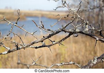 árbol, liquen, útil, rama, plano de fondo
