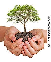 árbol, manos