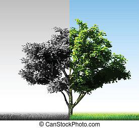 árbol., mitades, vector, dos, colorido
