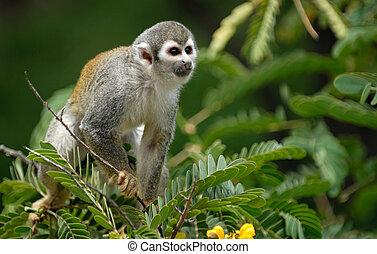árbol, mono