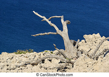 árbol, muerto, 04