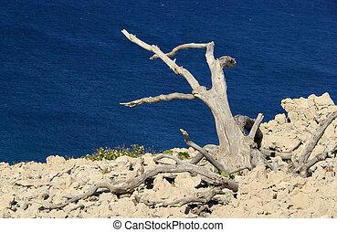 árbol, muerto, 05