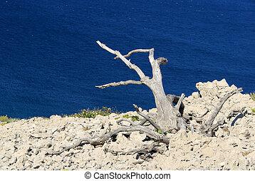 árbol, muerto, 06