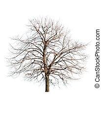 árbol muerto, aislado