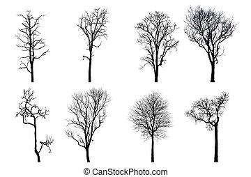 árbol muerto, aislado, leafs, seco, roble, silhouette., sin, corona, blanco