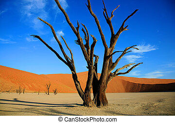 árbol muerto, en, sossusvlei