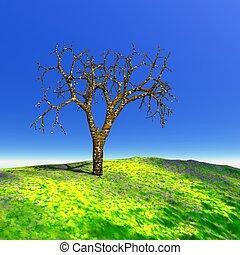 árbol muerto, en, verano