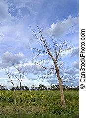 árbol, muerto, paisaje
