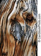 árbol muerto, tronco, nudo
